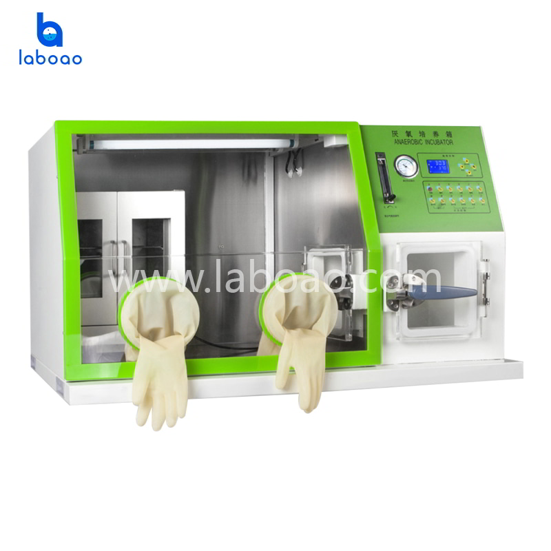 Desktop Anearobic Incubator with LCD Screen